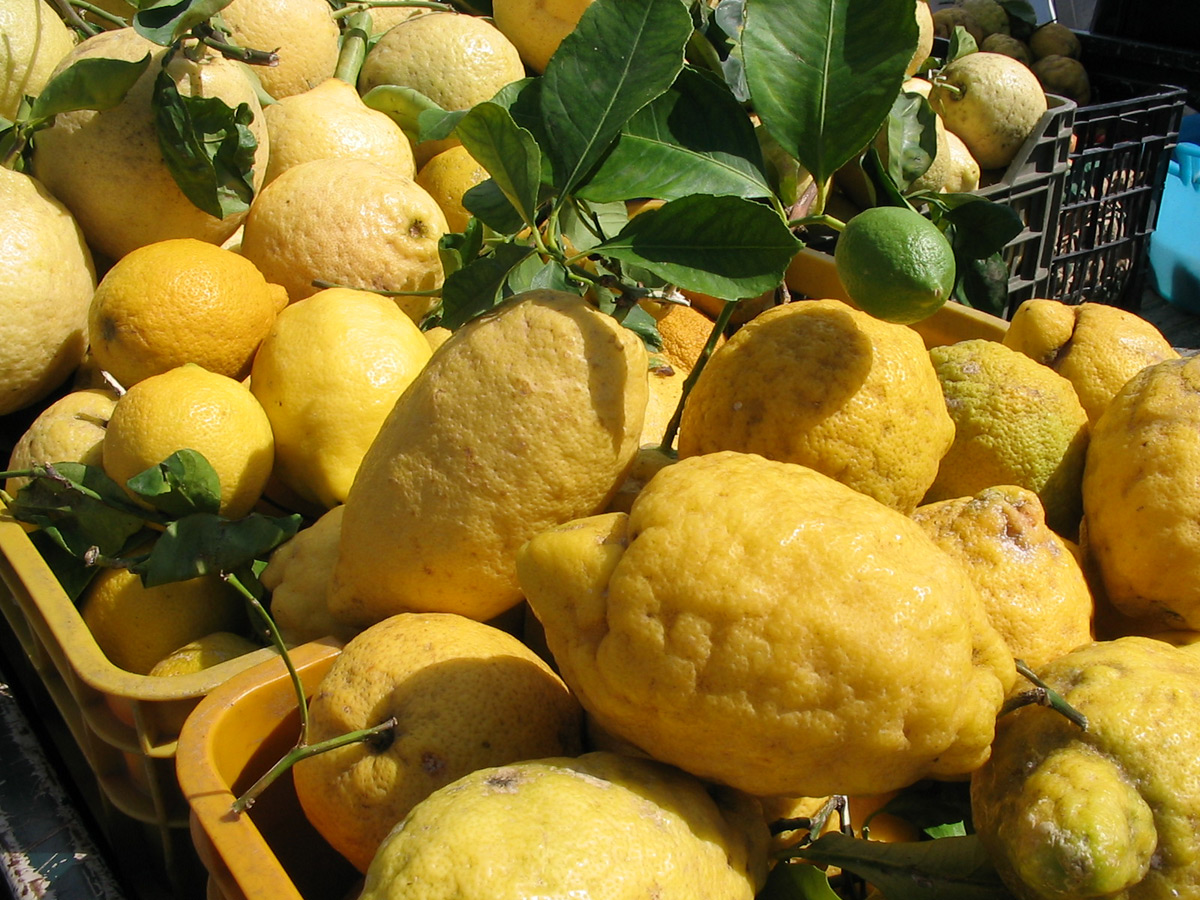 Prachtige citroenen om limoncello te maken - artikel over limoncello